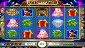 cats and cash screenshot 3